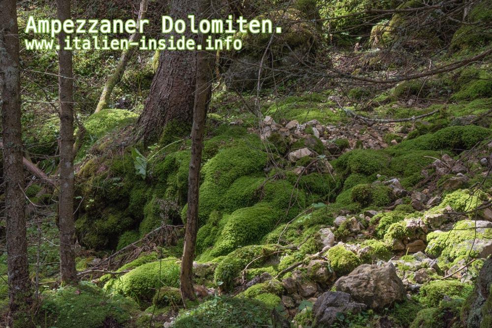 Ampezzaner-Dolomiten-Wald-mit-Moos