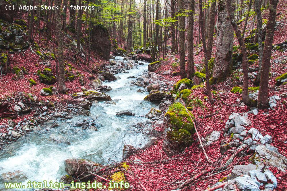 Wald-Herbst-Basilikata