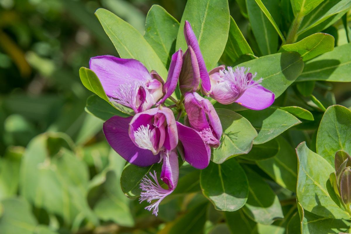 Mediterrane-Flora