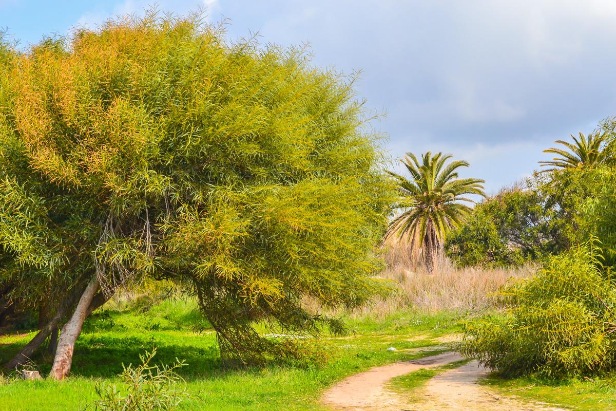 Capo-San-Marco-Landschaft