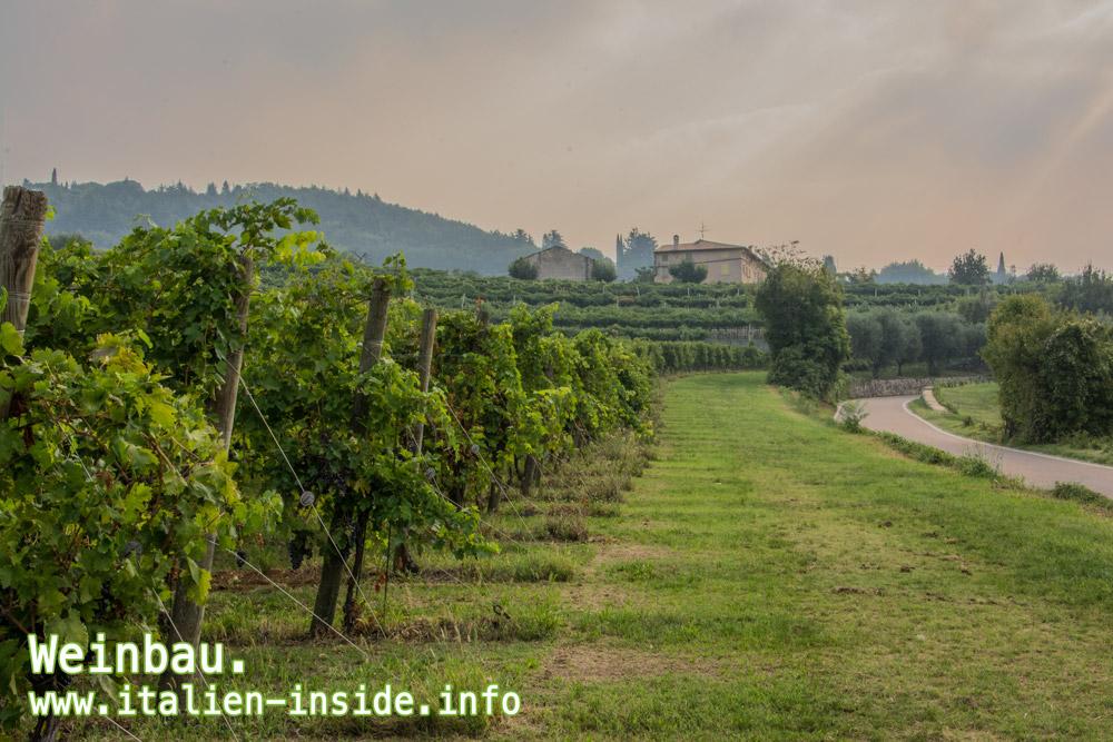 Weinbau-Valpolicella