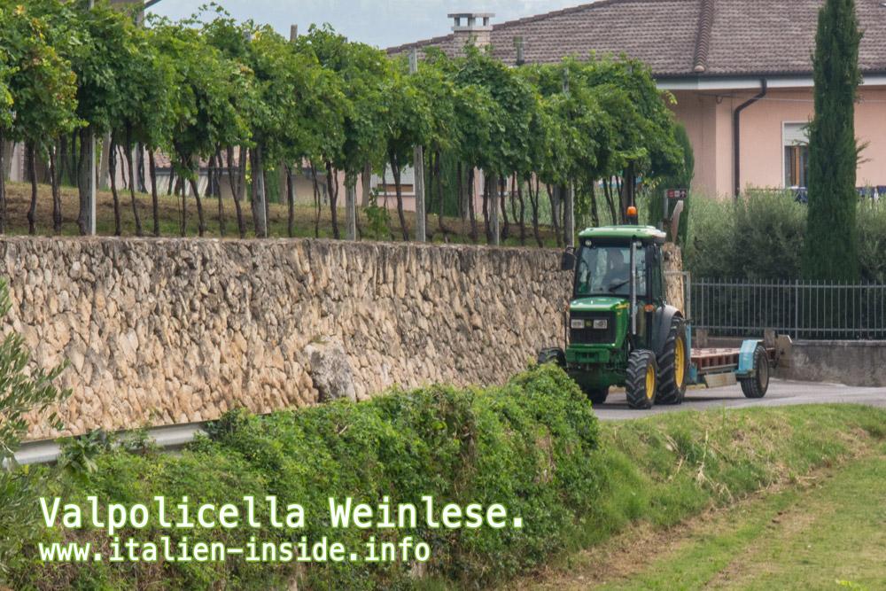 Valpolicella-Traktor-Weinlese