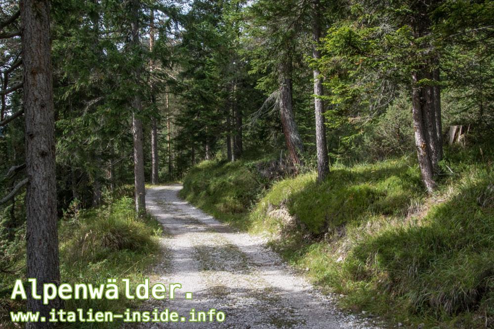 Wandern-Radfahren-Wald