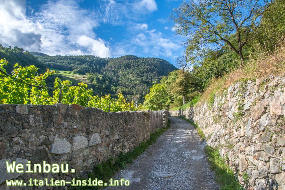 Wandern-Radfahren-Weinbaugebiete
